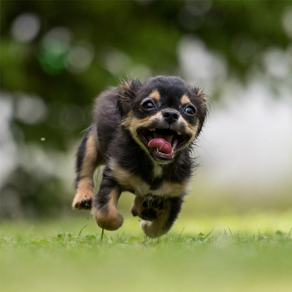 Little dog running in garden