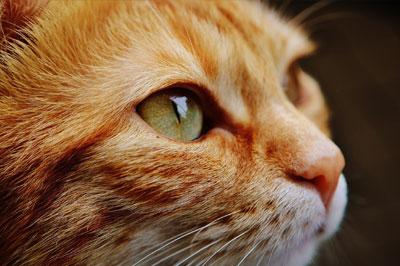 cat's eye, close up