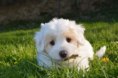 Beautiful small puppy in the garden
