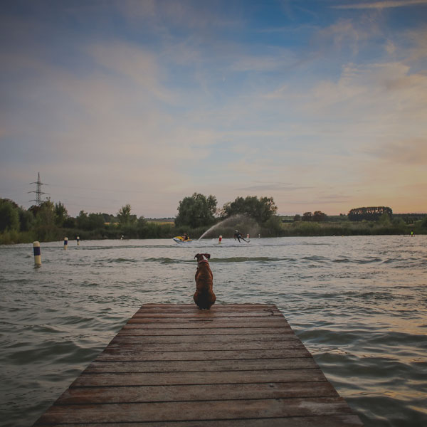 dog sitting on a pier