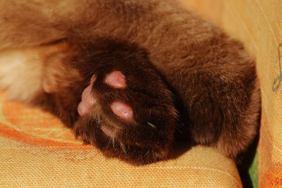 Detail shot of cat paw